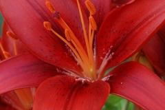 Summer Blooms 2011
