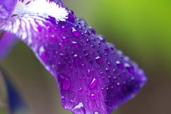 Purple 5_page image